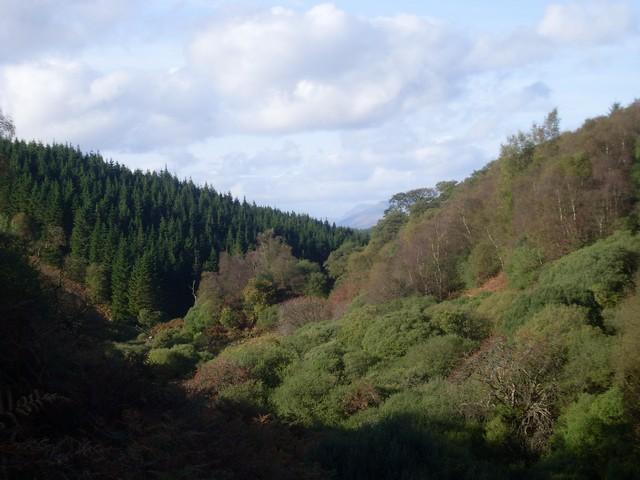 The glen of Burn Crooks at Dumbarton Muir Forest