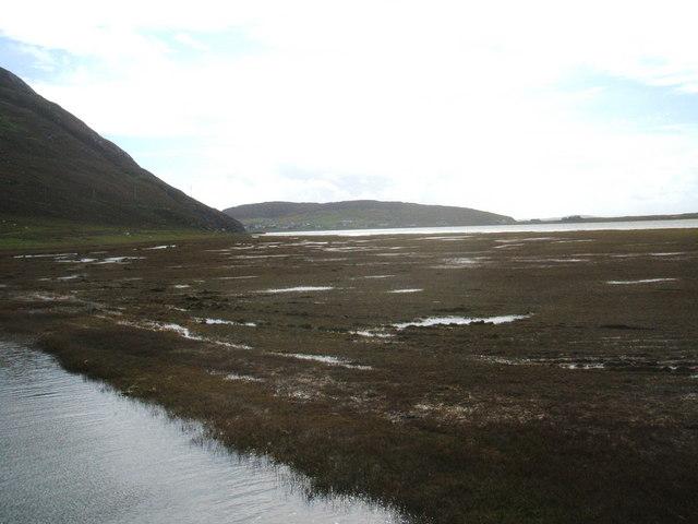 Tidal grasslands