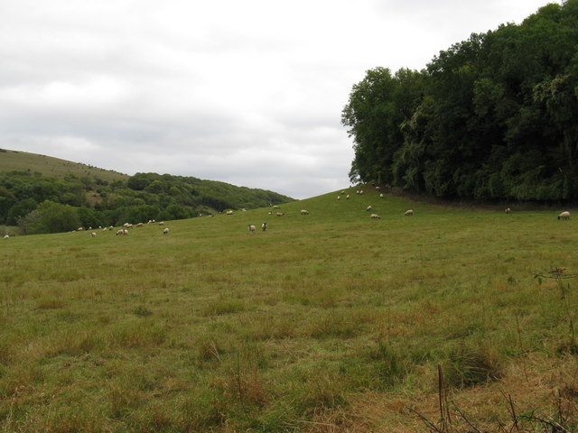 Sheep grazing at the bottom of Devil's Dyke