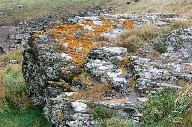 Lichen on rocks, Pen y Cyfrwy headland