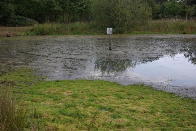 Butler's Pond