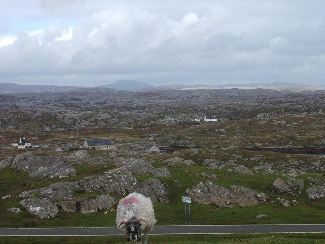 Fionnsabhagh with  sheep