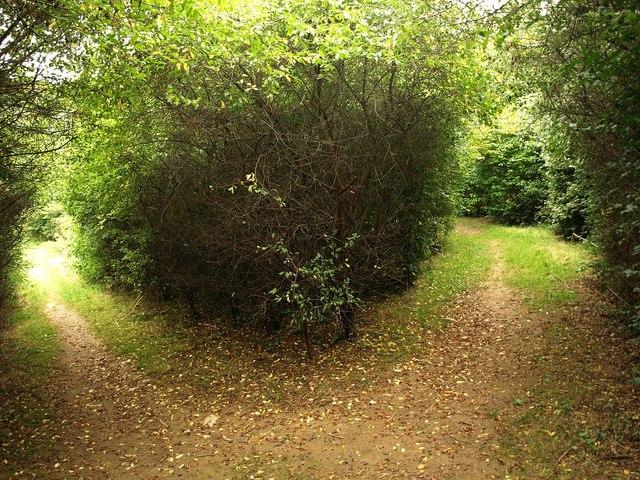 Path junction, Efford Marsh Nature Reserve