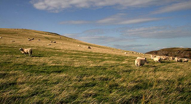 Farmland near St Abb's Head