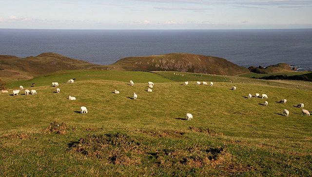 East Berwickshire coastal farmland
