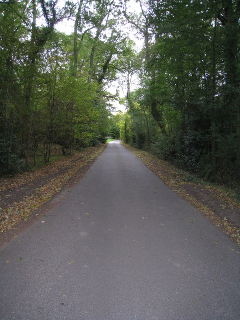 A leafy lane in Hampshire
