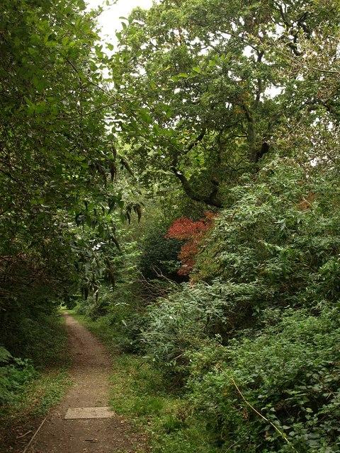 Footpath, Efford Marsh Nature Reserve