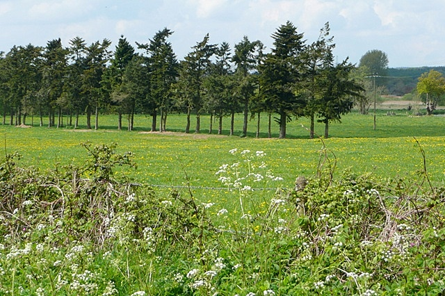 Meadow near Folds Farm