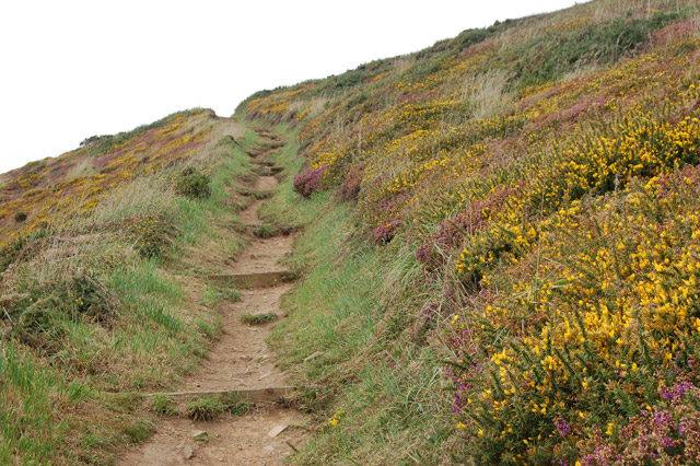 Colour by the coastpath above Newgale