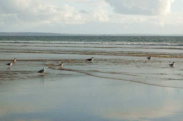 Gulls on the low water shoreline at Newgale
