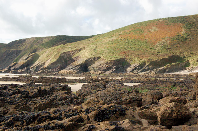 Mussel beds near Cym-bach, north of Newgale