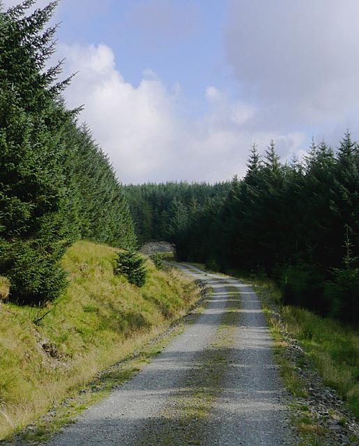 Forestry road on Moel Prysgau, Powys