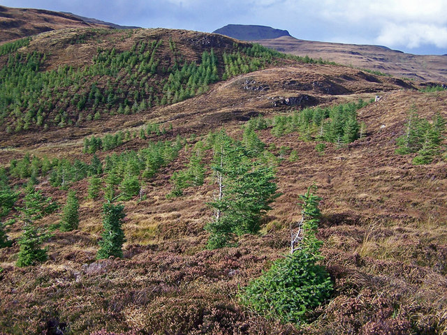 Young trees on Beinn na Moine