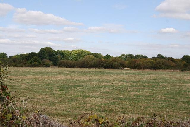Field north of Lower Haysden Lane, Lower Haysden