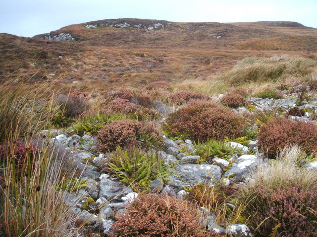 Grasses, heather and ferns