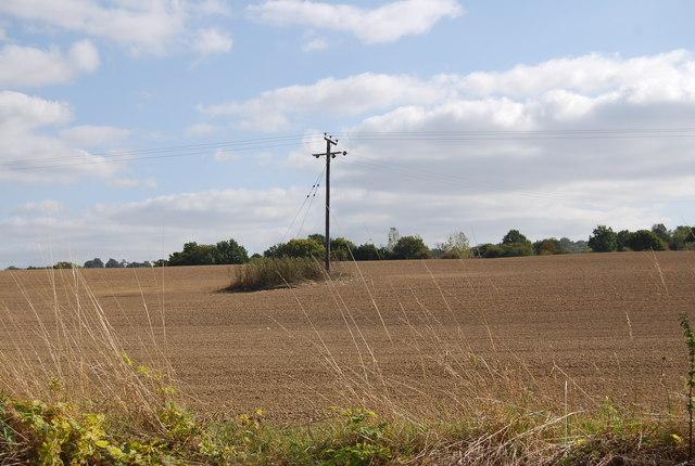 Telegraph Pole in a field off Lower Haysden Lane