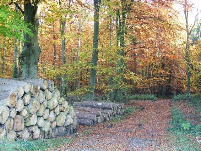 Woodland Track in Autumn