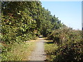 TM3591 : Trackbed of the former Waveney Valley Railway by Ashley Dace