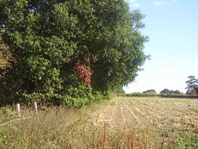 Field along side a small wood