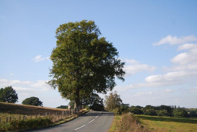 Large roadside tree, Ensfield Rd