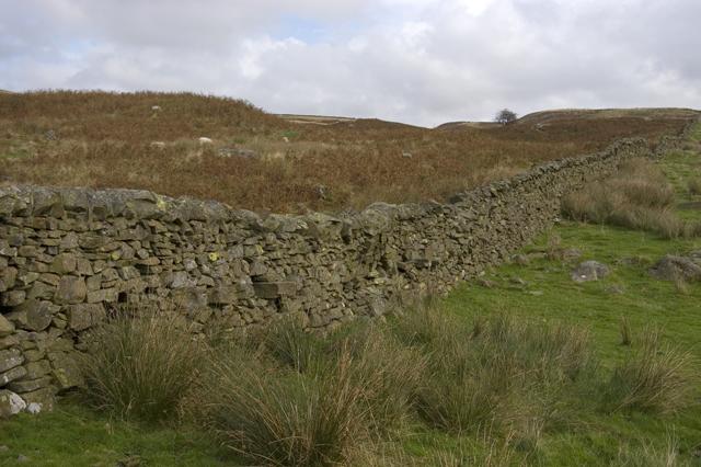 Fellside Wall on Staveley Head Fell