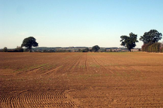 Disced Field