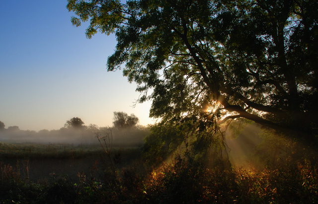 River Swale, close to Thornton Bridge, autumn morning mist