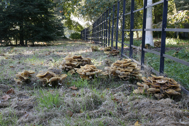 Fungi at Batsford Arboretum