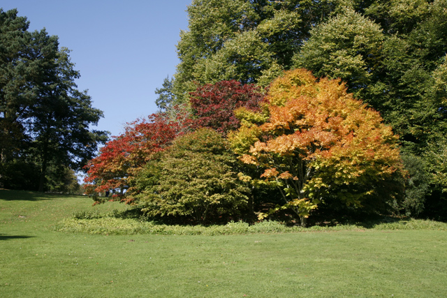 Autumn in the Arboretum at Batsford