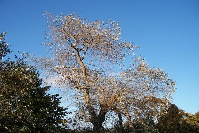 Tree caught in October sunlight