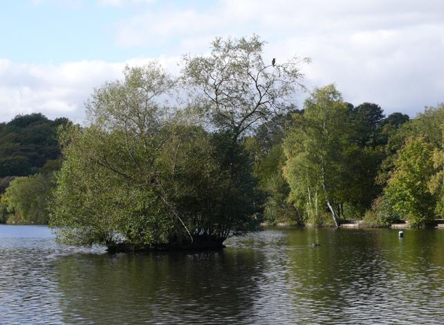 Tree with Cormorant