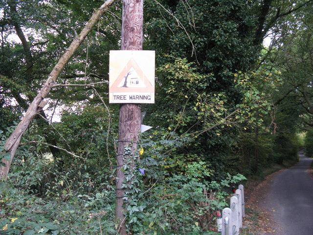 Beware of falling trees