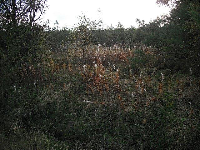 Barnsmuir Wood