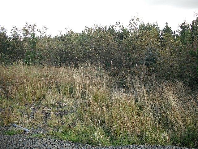 Forest, Limerigg
