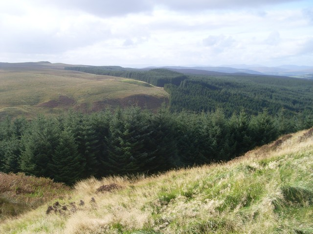 Forest at glen of Burn Crook