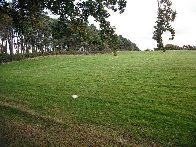 Grass field, Slamannan