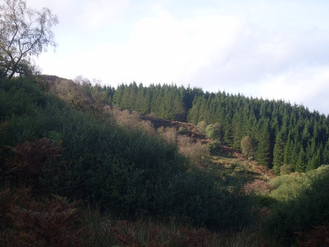 Edge of forest at valley of Burn Crook