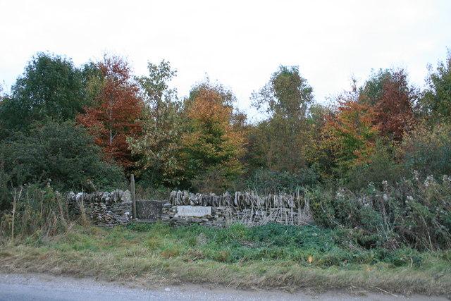 John's Wood