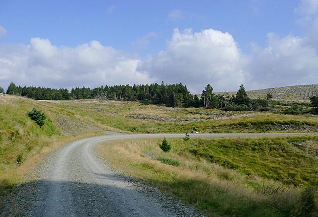 Forestry road near Drum Nantyrhelyg, Powys