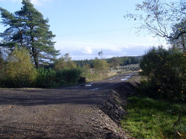 Forest path near Auchineden Farm
