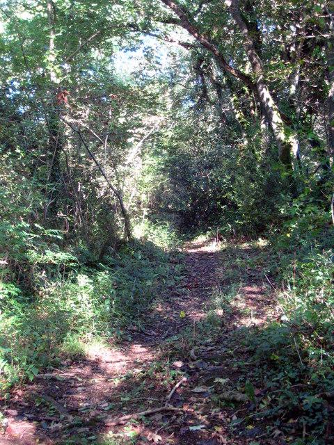 Public footpath in Trehane Wood