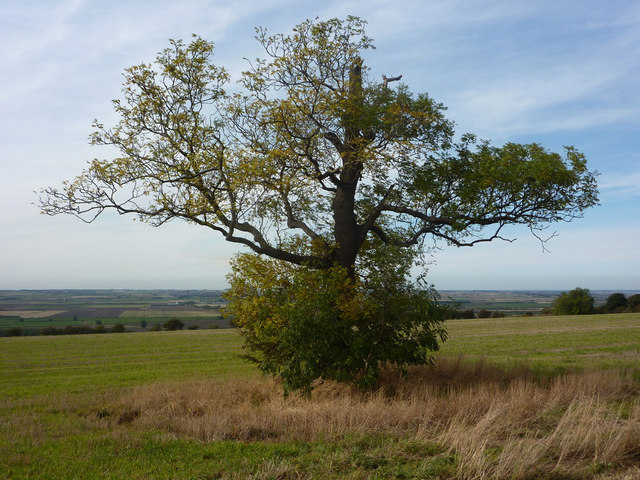 Tree on Saxby Hill