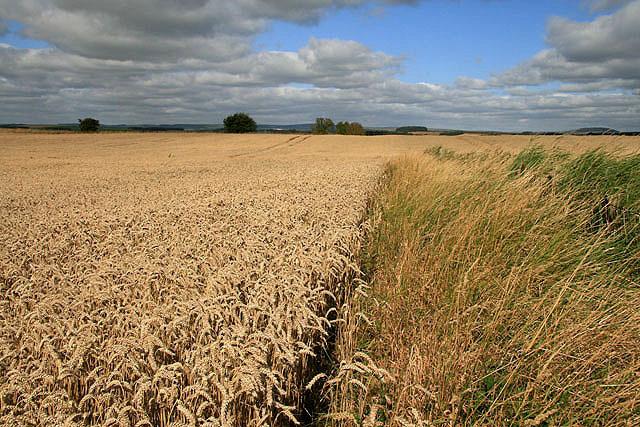 Arable farmland at Catmoss near Greenlaw