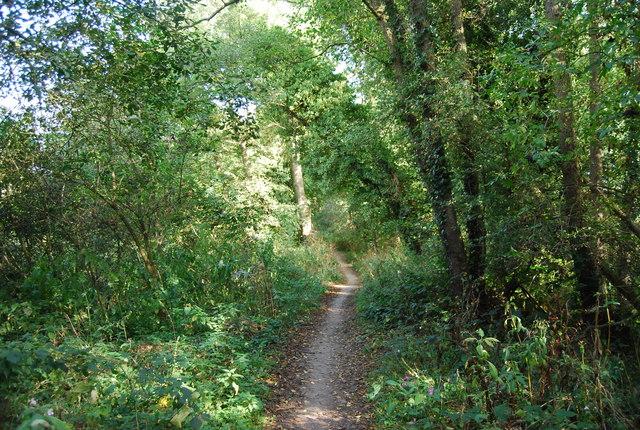 Eden Valley Walk in the trees