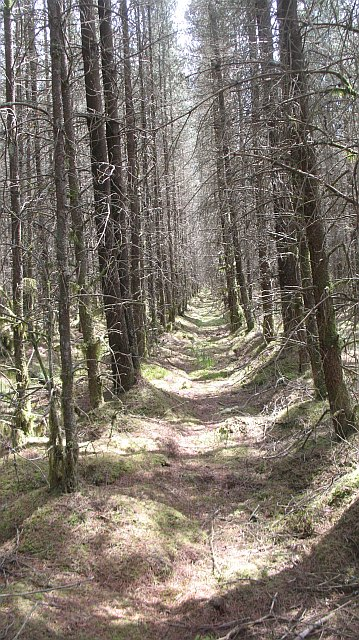 Inside the forest, Flanders Moss