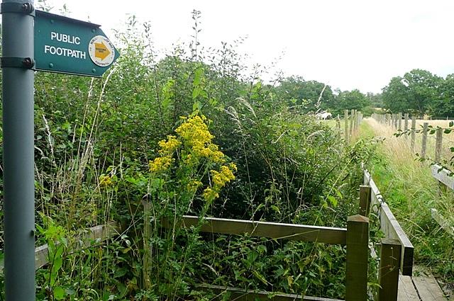 Footpath towards Skinner's Green