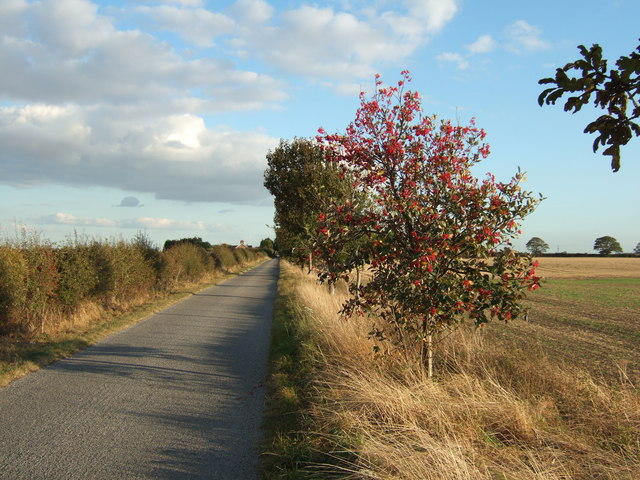 Trees along Anchor Road
