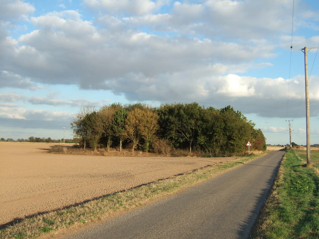 Copse at the end of Hospital Road