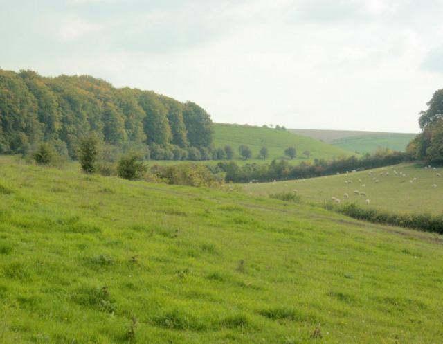 2009 : Pasture land south of Monkton Deverill