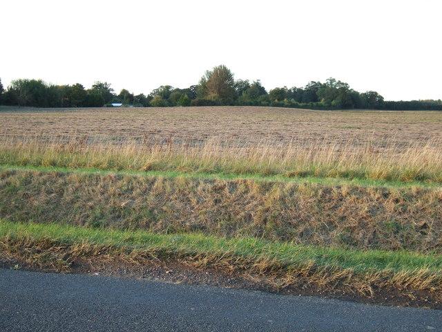 A hill in the fens near Newton